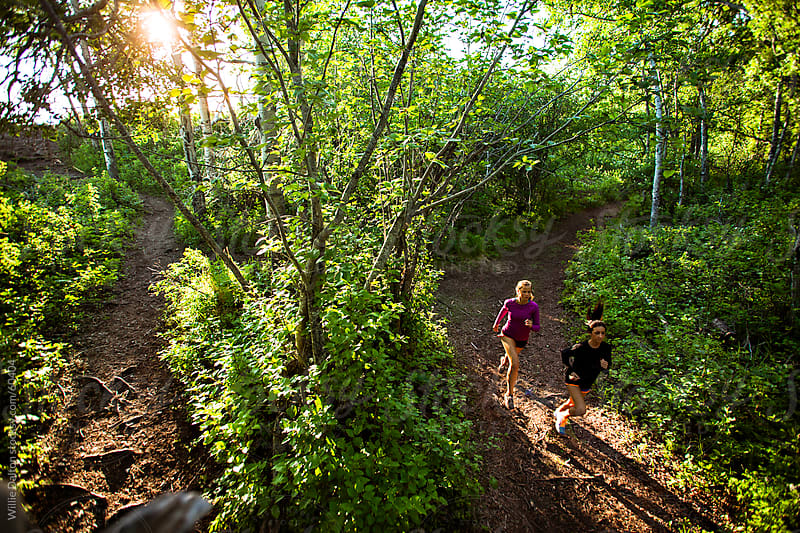Overhead View of a Sunset Trail Run Through a Wooded Forest by Willie Dalton for Stocksy United