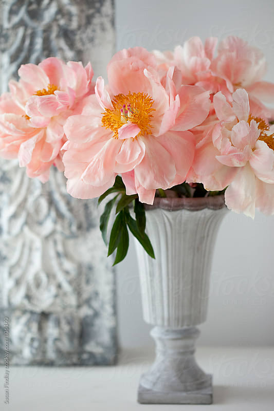 treepeony by Susan Findlay for Stocksy United