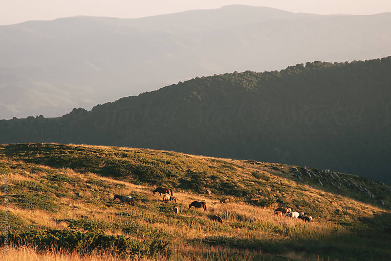 Wild horses on slope by Pixel Stories for Stocksy United
