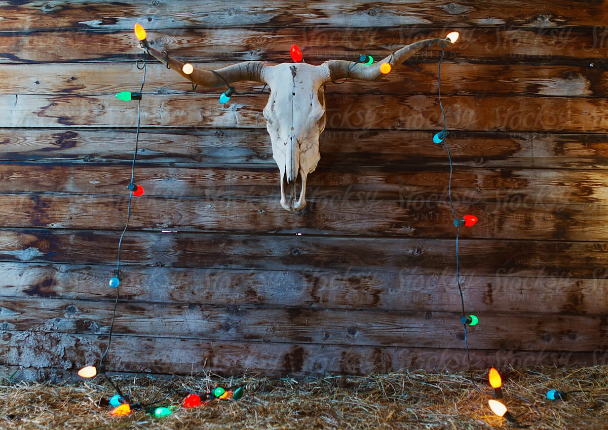 a longhorn skull hanging on a rustic wall decorated with christmas lights by tana teel for