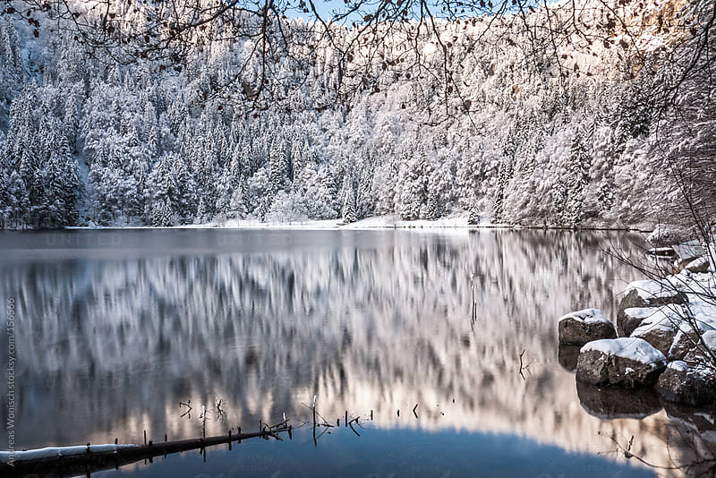 Reflection of snow covered Trees in Lake by Andreas Wonisch for Stocksy United
