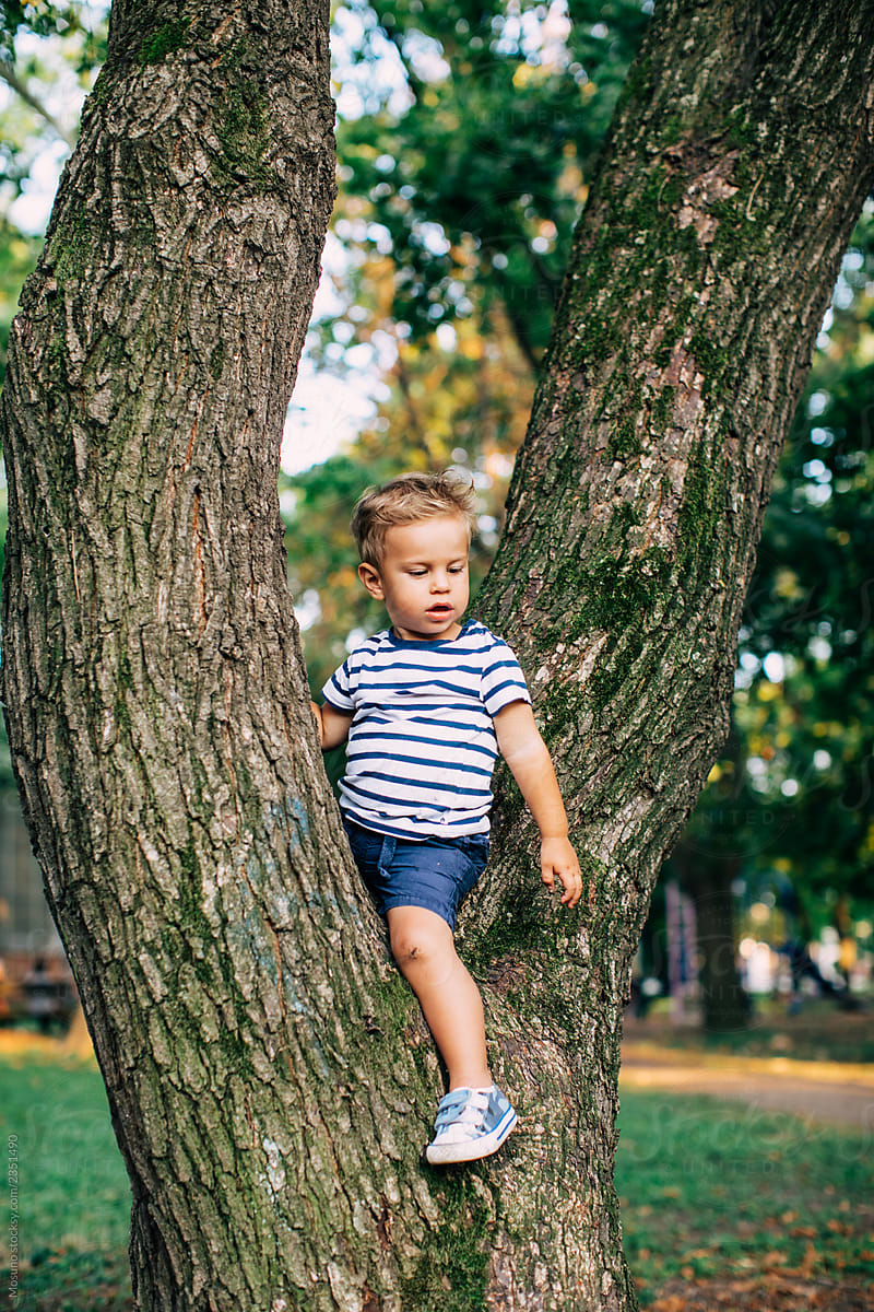 Cut little Boy sitting on the Tree by Mosuno - Kid, Park - Stocksy United