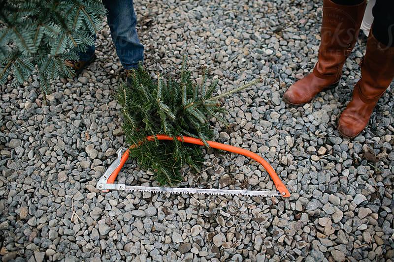 Tree Farm by Jeff Marsh for Stocksy United