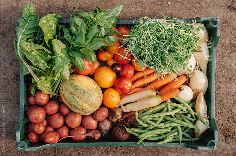 variety of freshly harvested vegetables by Deirdre Malfatto for Stocksy United