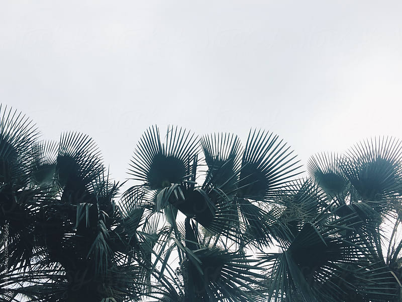 palm tree leaf by jira Saki for Stocksy United