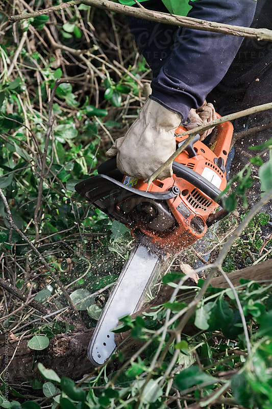 Chainsaw in use cutting tree branches by Rowena Naylor for Stocksy United