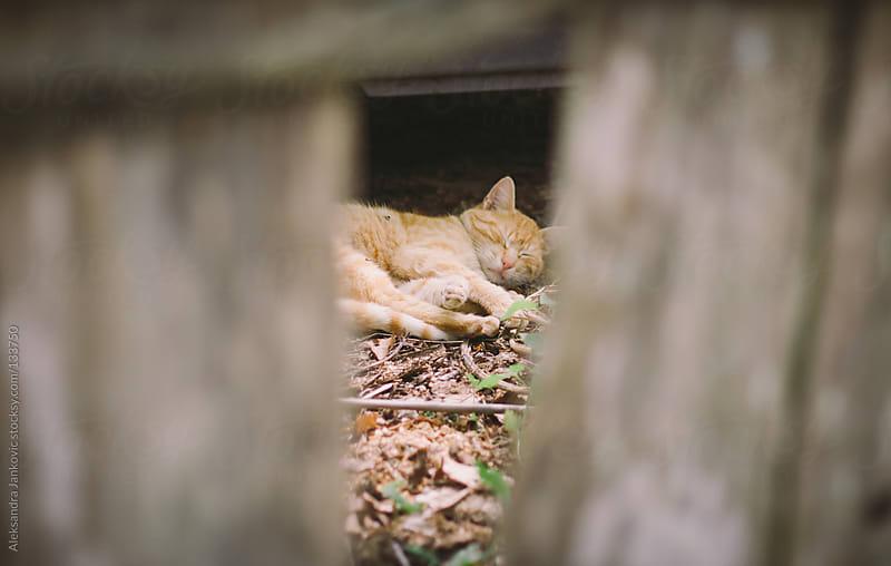 Lazy Cat by Aleksandra Jankovic for Stocksy United