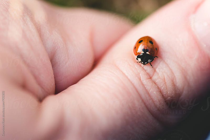 Ladybug on a thumb by Courtney Rust for Stocksy United
