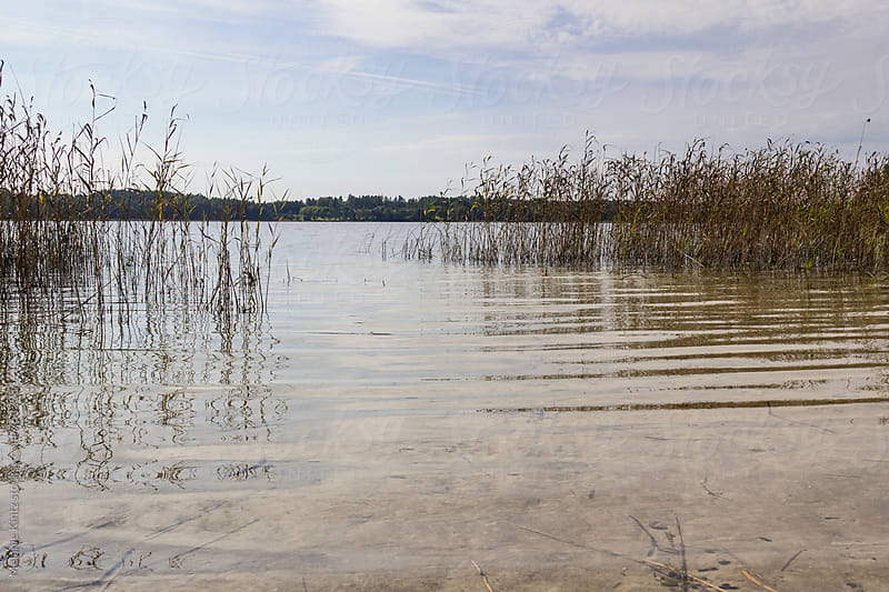 Lake with clean water and reeds by Melanie Kintz for Stocksy United
