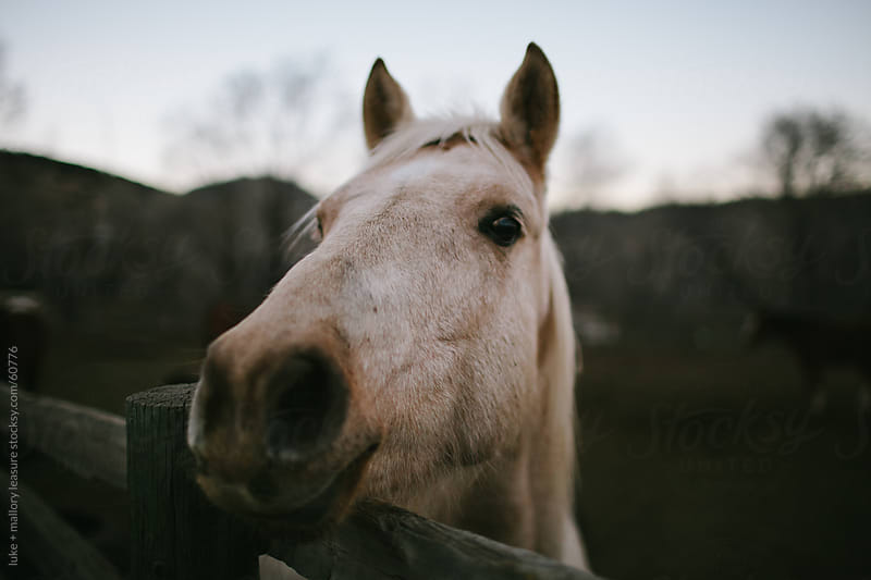 Curious Horse by luke + mallory leasure for Stocksy United