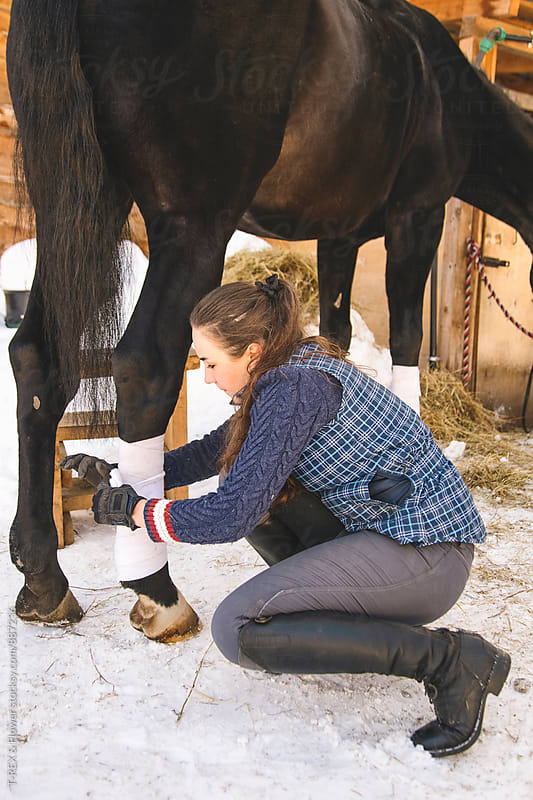 Young horse rider bandaging her horse's leg by Danil Nevsky for Stocksy United