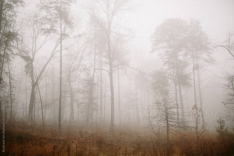 Foggy Forest by Brad & Jen for Stocksy United