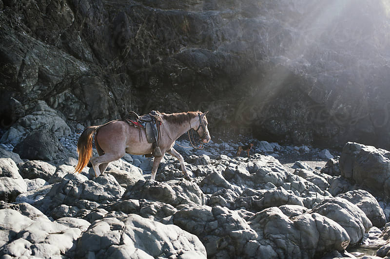 Brown horse walking over heavy rocks towards the light  by Denni Van Huis for Stocksy United