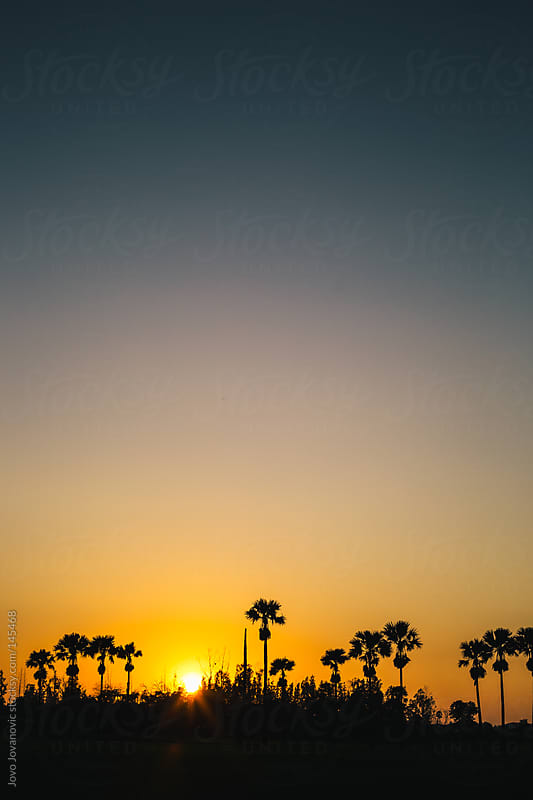 Palm trees during sunset. by Jovo Jovanovic for Stocksy United
