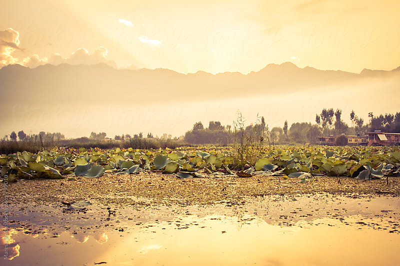 A radient sunrise on Dal Lake, India by Maresa Smith for Stocksy United