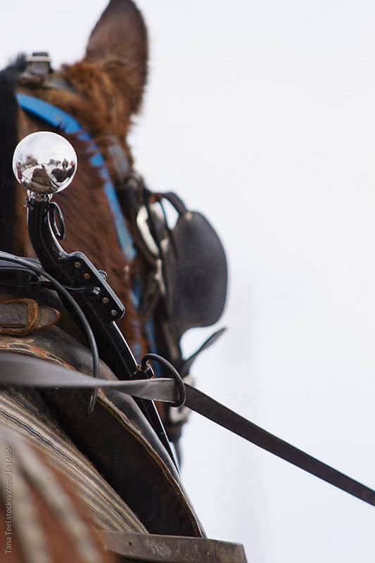 Hame ball on top of a horse collar worn by draft horses by Tana Teel for Stocksy United