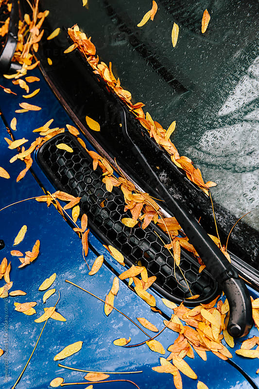 Late Autumn Leaves on Car  by Raymond Forbes LLC for Stocksy United