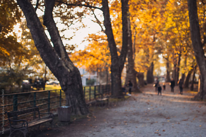 City park in autumn by Maja Topcagic for Stocksy United