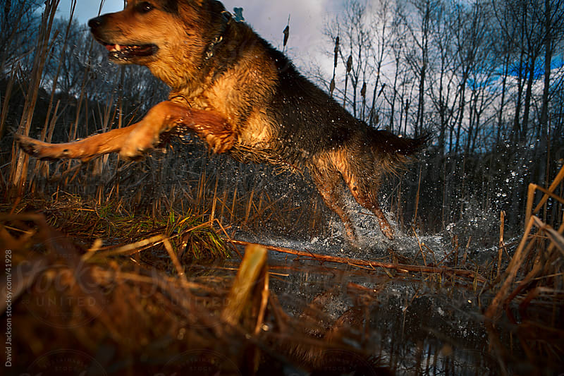 Swamp Run by David Jackson for Stocksy United