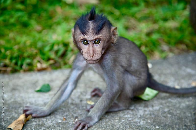 Baby green eyed monkey sitting on the ground alone, Monkey Jungle, Bali, Indonesia by Jaydene Chapman for Stocksy United