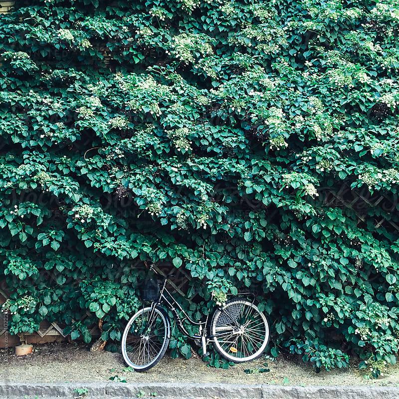 Bik Against leafy Background by Hung Quach for Stocksy United
