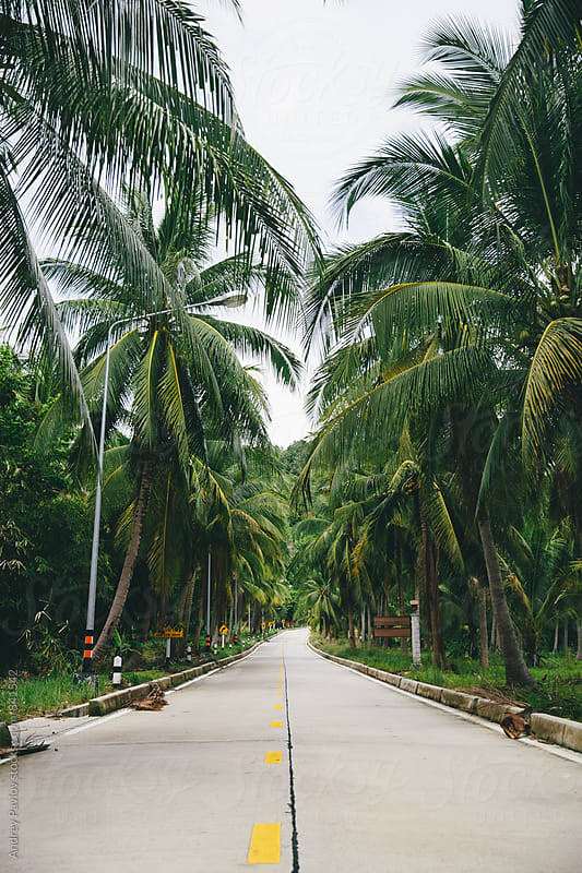 Road surrounded by palm trees by Andrey Pavlov for Stocksy United