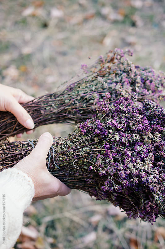Collecting dry herbs by Pixel Stories for Stocksy United
