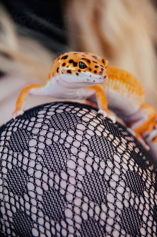 Leopard Gecko by Rebecca Rockwood for Stocksy United