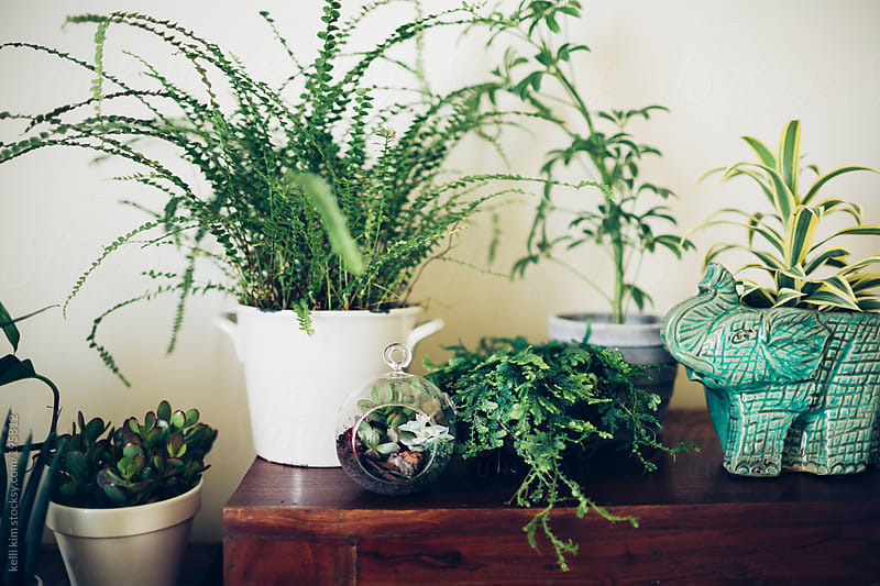 Lush green household plants on a table by Kelli Seeger Kim for Stocksy United