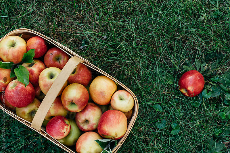 Apple basket on grass by Gabriel (Gabi) Bucataru for Stocksy United