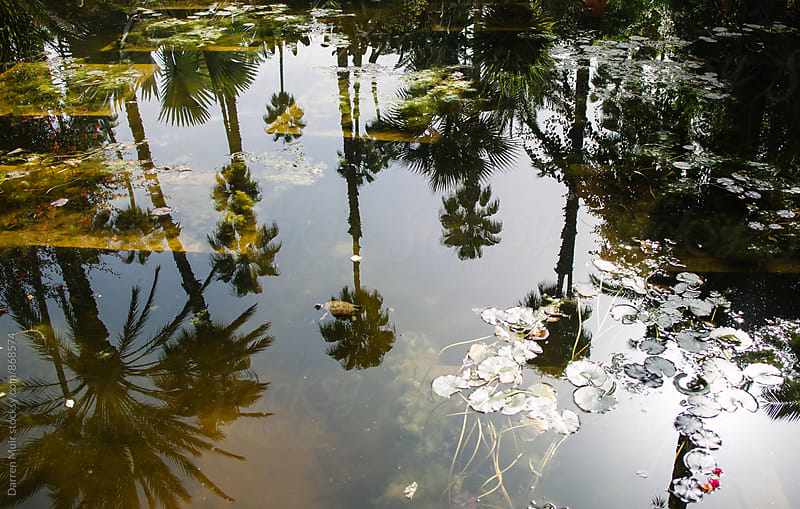 Reflections of palm trees in a pool of water. by Darren Muir for Stocksy United