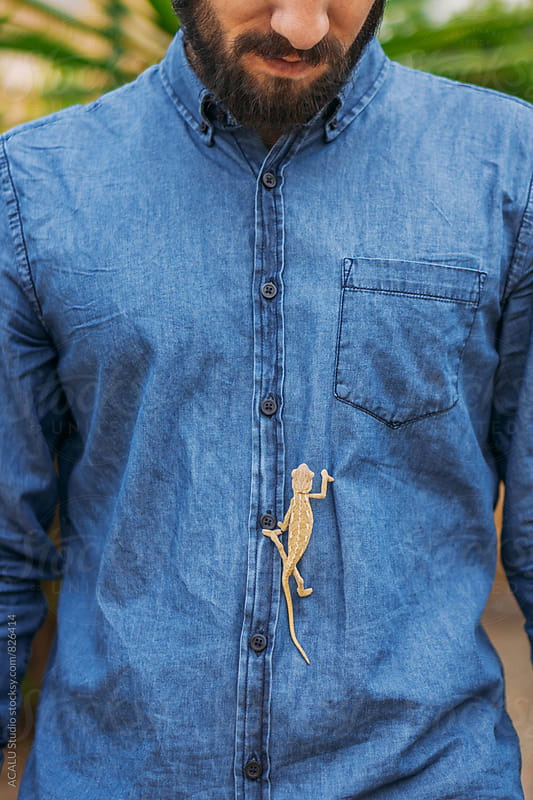 Chameleon climbing a blue shirt by ACALU Studio for Stocksy United