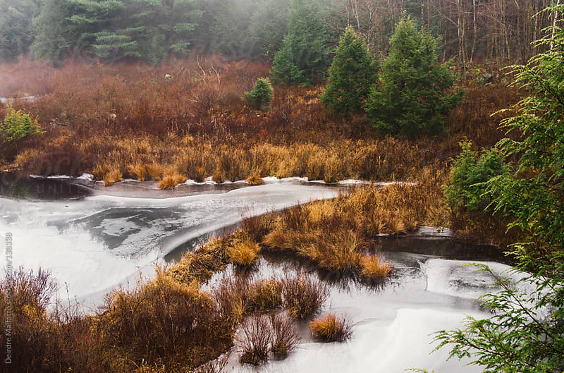 icy pond with fog and pine trees and beaver dam by Deirdre Malfatto for Stocksy United