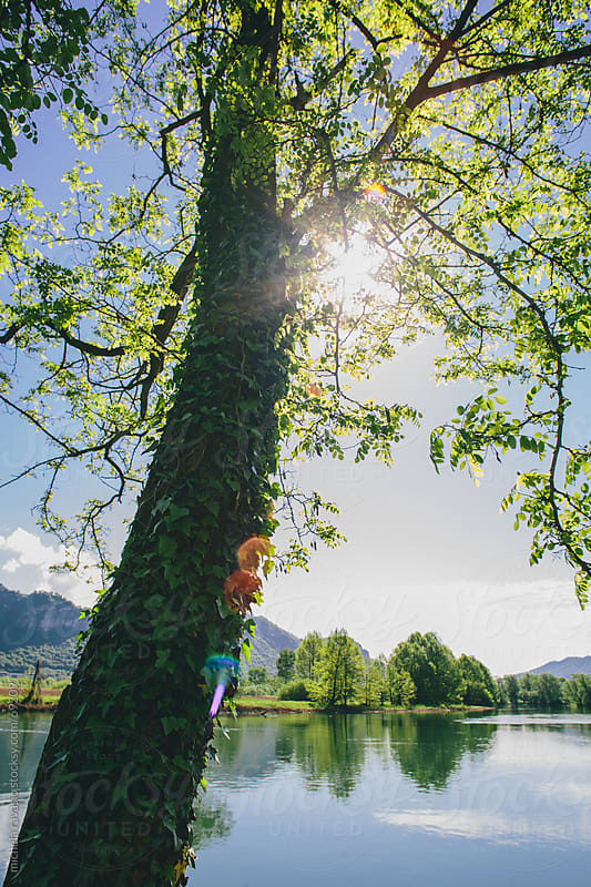 A tree along the river by michela ravasio for Stocksy United