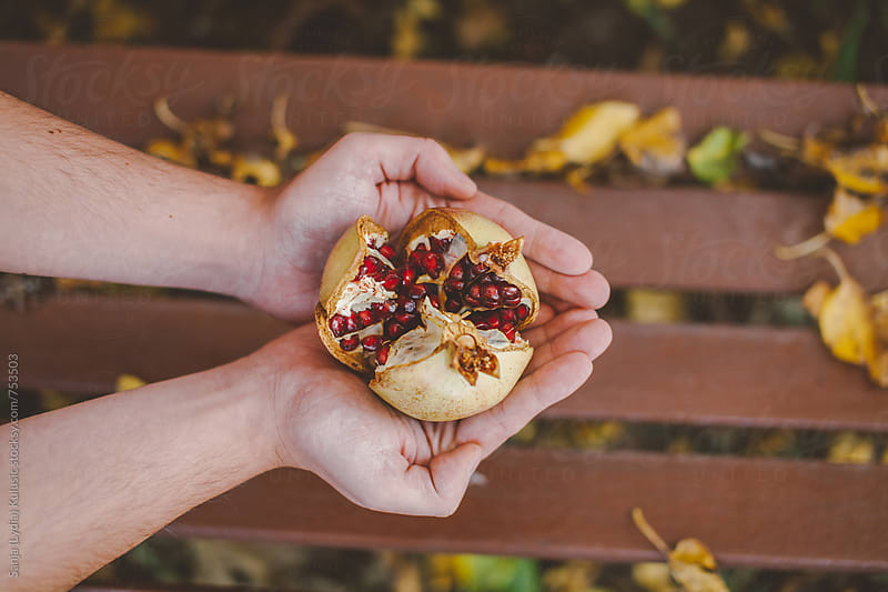 Male hands holding fresh organic open up pomegrante by Sanja (Lydia) Kulusic for Stocksy United