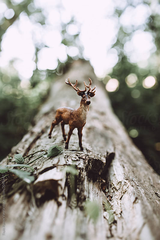 toy deer by Thais Ramos Varela for Stocksy United