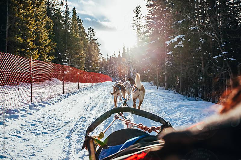 Dog sledding by Christopher Troy Dowsett for Stocksy United