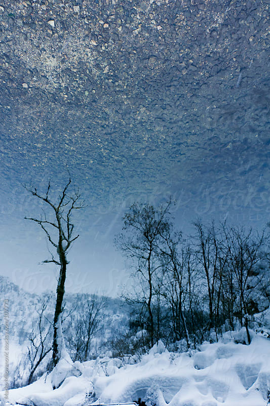 Reflection of trees in water, landscape by Marko Milovanović for Stocksy United