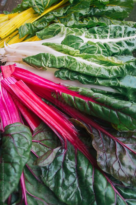Freshly Harvested Rainbow Chard by Rowena Naylor for Stocksy United