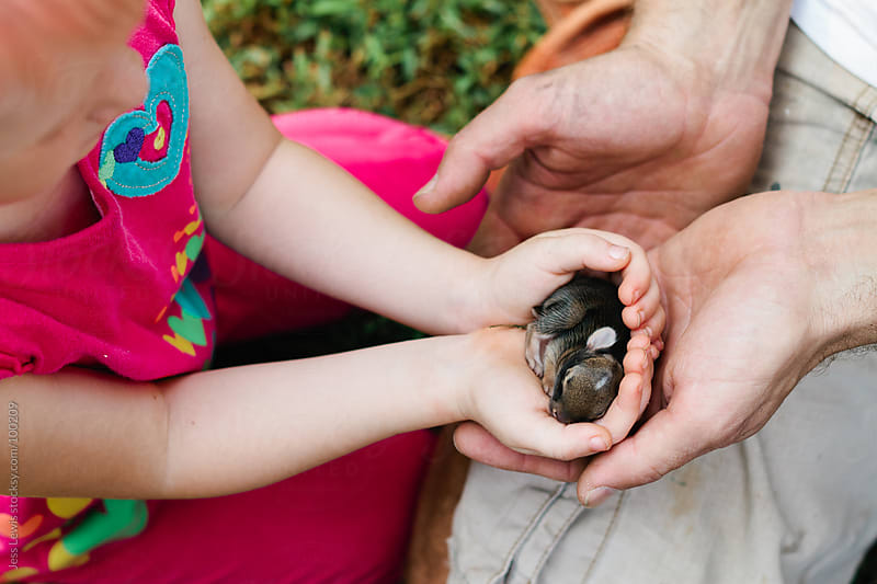 child holding newborn rabbit by Jess Lewis for Stocksy United