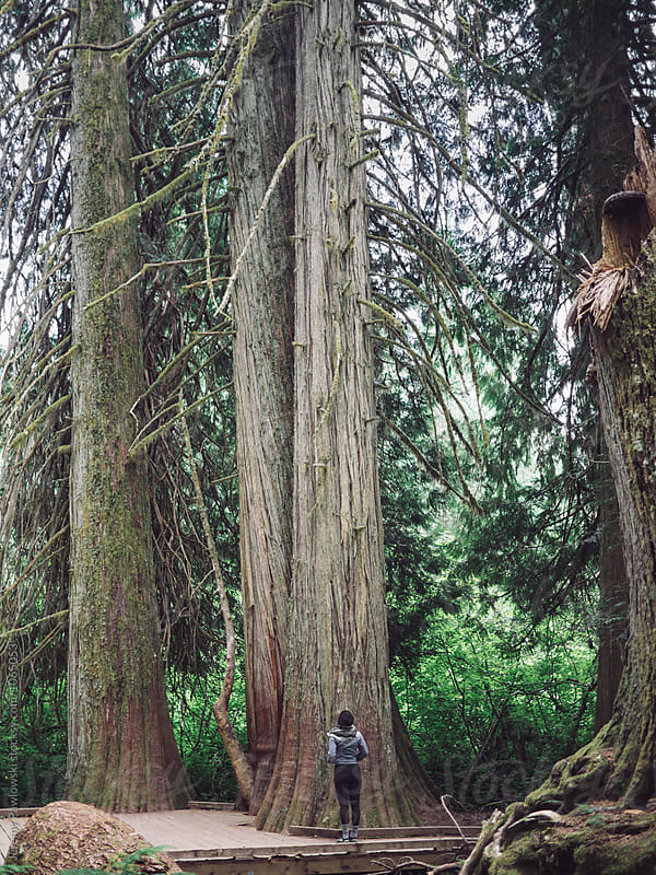 Young woman hiking in denim jacket looking up at tall tree by Jeremy Pawlowski for Stocksy United