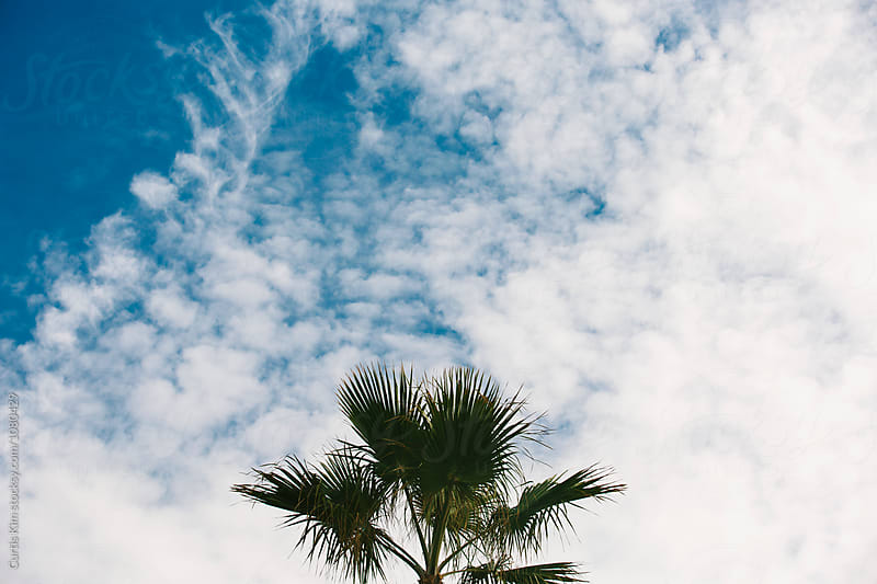 Palm tree with blue skies and clouds  by Curtis Kim for Stocksy United