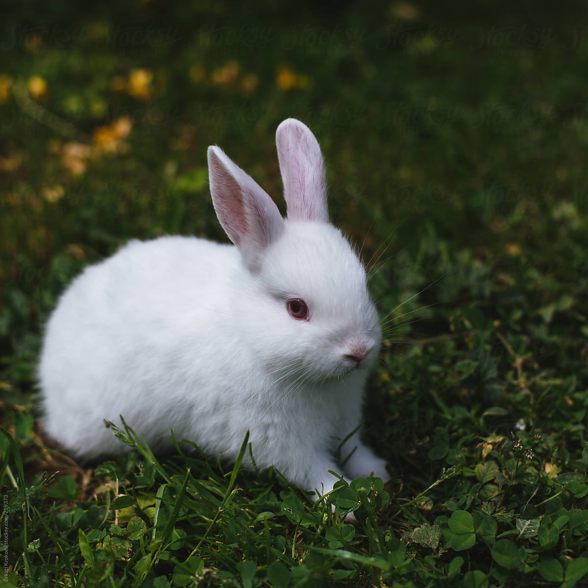 White baby rabbit by Brkati Krokodil - Easter, Rabbit ...