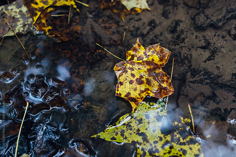 Fall leaves in water by Gabriel (Gabi) Bucataru for Stocksy United