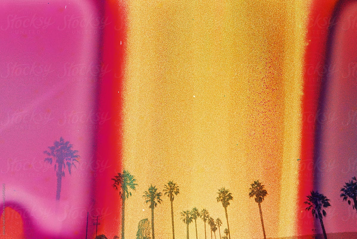 california palm trees with pink orange and yellow on film stocksy