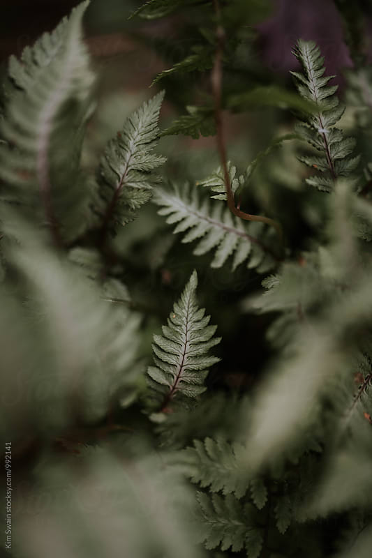 Ferns by Kim Swain for Stocksy United
