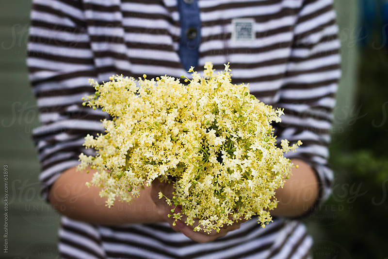 A bunch of Elderflowers picked to make cordial by Helen Rushbrook for Stocksy United