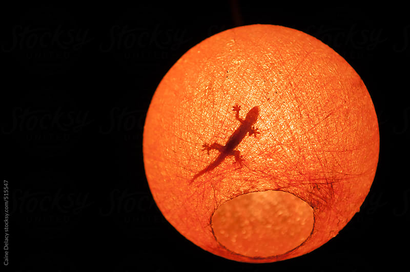 Abstract image of lizard in lamp shade by Caine Delacy for Stocksy United
