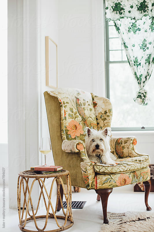 Dog Sitting in Chair by luke + mallory leasure for Stocksy United