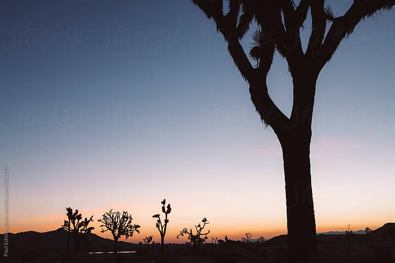 Silhouette of Joshua trees at dusk in the Mojave desert, Joshua Tree NP, CA, USA by Paul Edmondson for Stocksy United